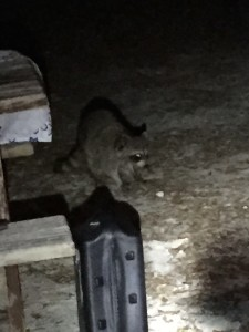 A Thief at Our Campsite